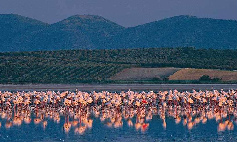 Fuente de Piedra, Flamingo